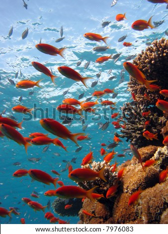 Coral Scene. shot in the Red Sea 17/12/2007 stock photo