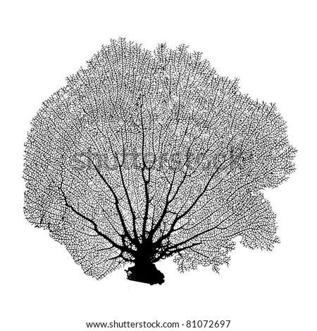 Coral Sea Fan silhouette Illustration Raster