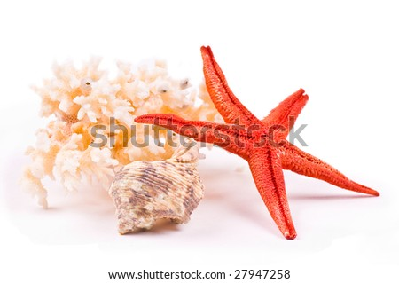 Coral, sea-star and seashell on the white background