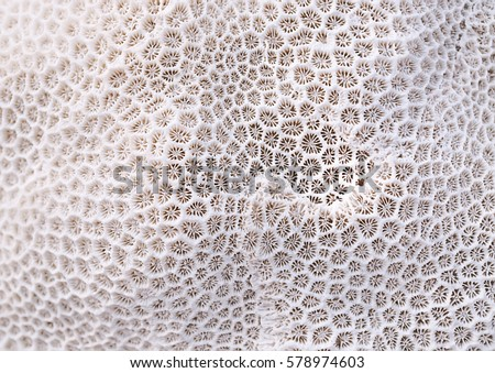 Coral texture  #578974603