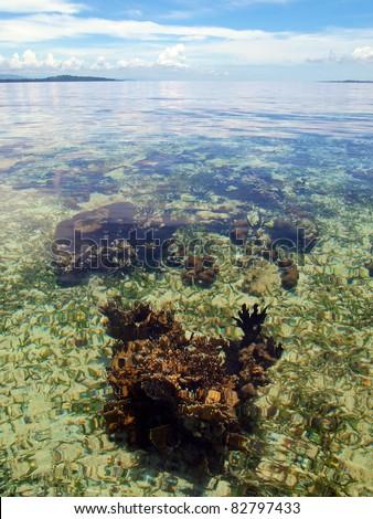 Coral under water surface in Bocas del Toro, caribbean sea, Panama