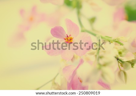 Coral Vine, Mexican Creeper, flower border, background, vintage tone