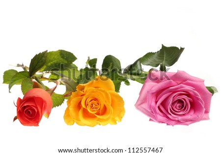 coral, yellow and pink roses