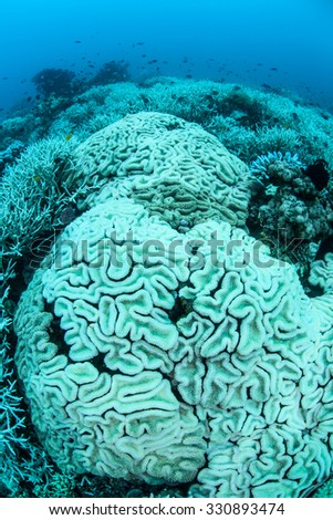 Corals are turning white as they bleach. Coral bleaching occurs when intracellular endosymbionts (zooxanthellae) are lost due to high sea surface temperatures or other environmental conditions.