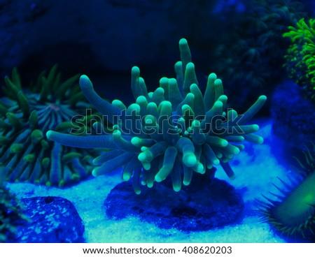 corals in the aquarium light black light ez canvas