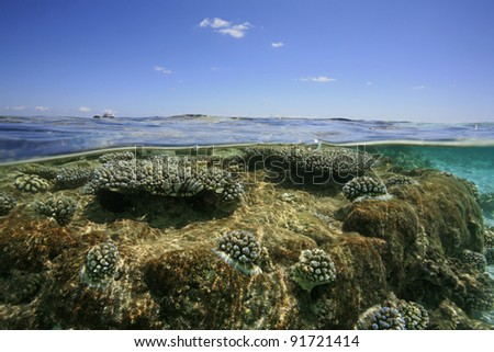 Corals in the shallow water of a lagoon