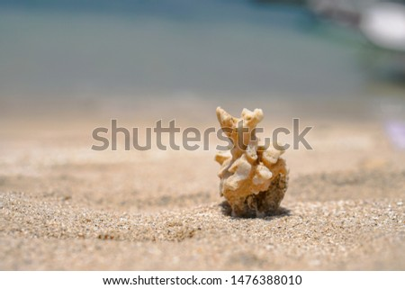 Corals rendered on the beach of the ocean. ruined reefs on the ocean. Background for travel themes, travel agencies. Stock photo