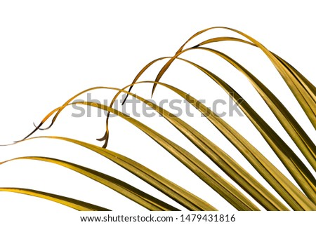 Corbett Vegetation cutting on white background #1479431816