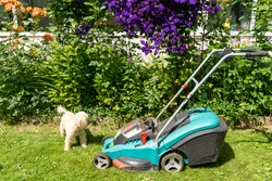 Cordless lawn mower and dog on the lawn against the background of a flower bed