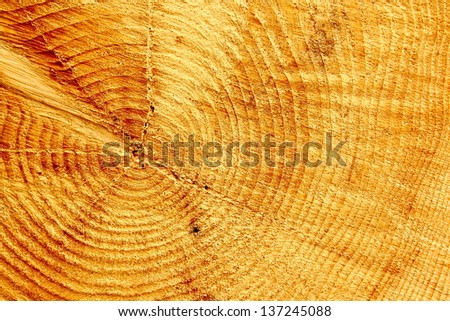 Core of the cut tree, close up, as background