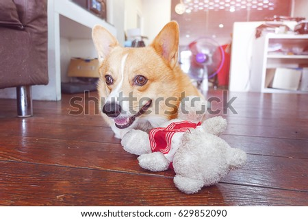corgi dog hug white teddy bear and smile face,funny animal picture,vintage tone