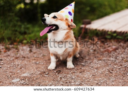 Corgi dog in a fancy cap smiling