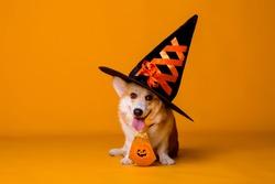 Corgi dog in Halloween costume on yellow background