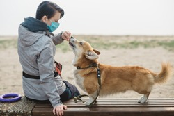 Corgi owner with pet pedigree walk in city park near river. Dog feeding and dog training with dog toys on embankment. Walking with protection  on quarantine. Pet owner with allergy on dog's fur.