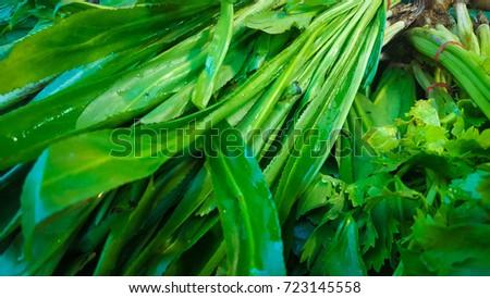 coriander #723145558