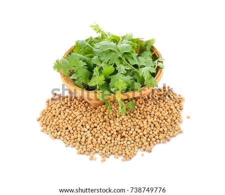 Coriander and coriander seed on white background #738749776