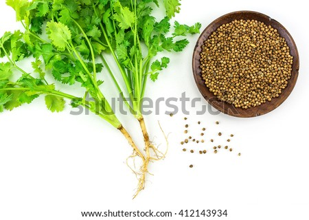 Coriander and coriander seeds  isolated on white background./ Coriander and coriander seeds #412143934