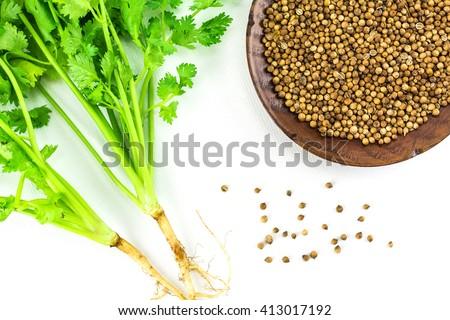 Coriander and coriander seeds  isolated on white background./ Coriander and coriander seeds #413017192