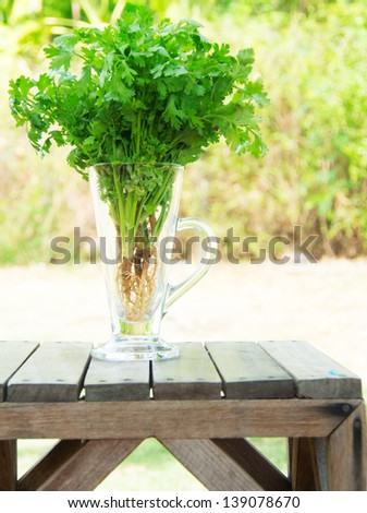 Coriander in glass on wood table