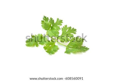 Coriander leaves on white background - isolated #608560091