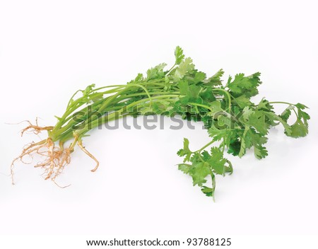 coriander or cilantro isolated on white background
