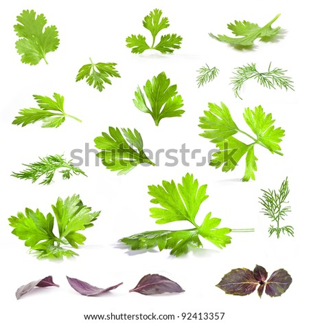 Coriander, parsley, dill and basil leaves isolated on white background - closeup.