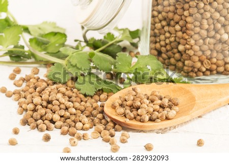 Coriander seeds and the fresh coriander on a wooden spoon