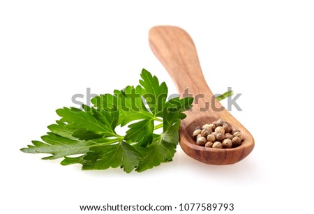 coriander seeds isolated on white background #1077589793