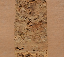 Cork for wine stoppers made from bark tissue of the Cork Oak (Quercus suber)