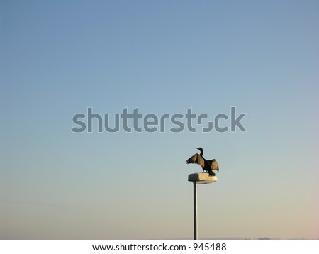 Cormorant on a Lamp