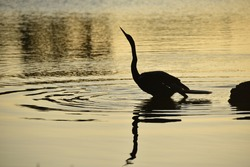 Cormorant silhouette at sunset in park