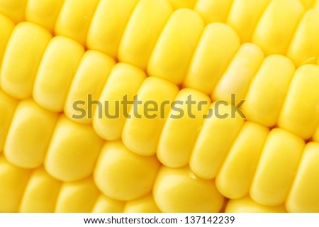 Corn close up #137142239