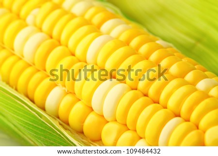 corn cob with green leaves