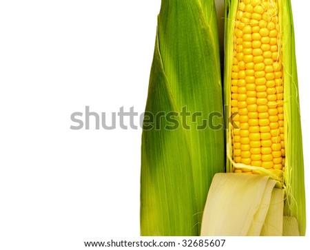 corn cobs - stock photo
