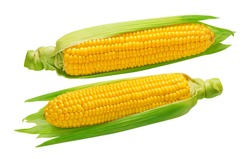 Corn cobs horizontal isolated on white background. Package design element with clipping path