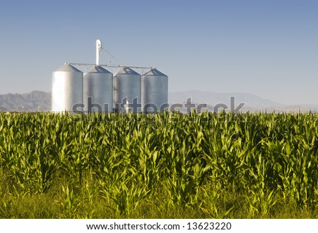 stock photo : Corn crop with farm silos and mountains in background