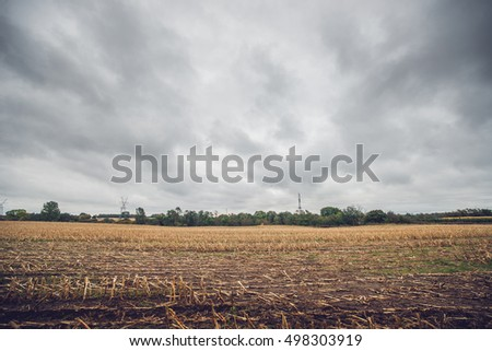 Corn crops on a field in the fall in cloudy weather