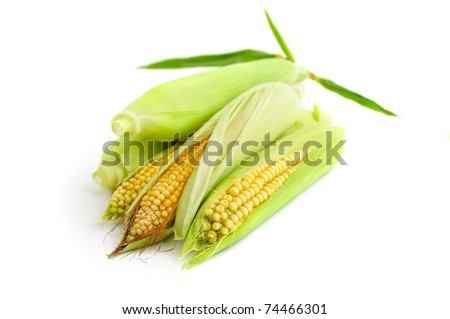 Corn crops with leaves isolated on white background