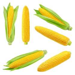 corn ear, isolated on white background, clipping path, full depth of field