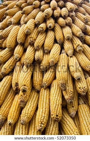 Corn ears in an amusement park.