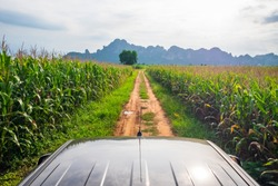 Corn farm view from the roof of pickup truck at Noen Maprang district, Phitsanulok, countryside of Thailand