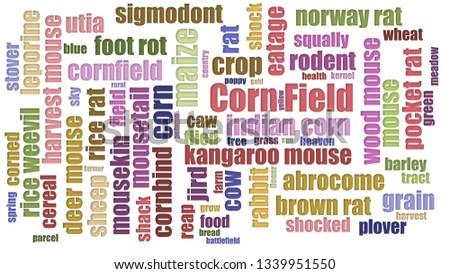Corn Field Tagcloud Randomised Isolated On White