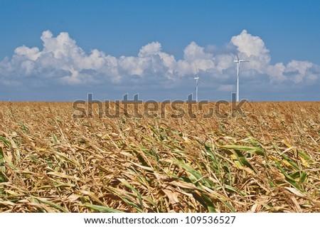Corn field, wind turbines on background, blue sky