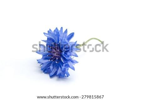 corn-flower closeup on white background