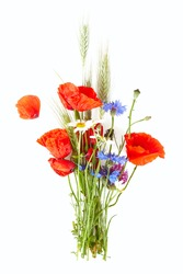 corn flowers isolated on white background