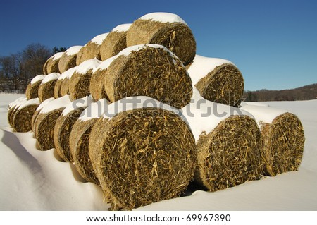Corn Fodder Bales in Winter:  Corn stalks, leaves and cobs that were left after the fall harvest are used as animal feed and bedding during the winter months in southern Wisconsin.