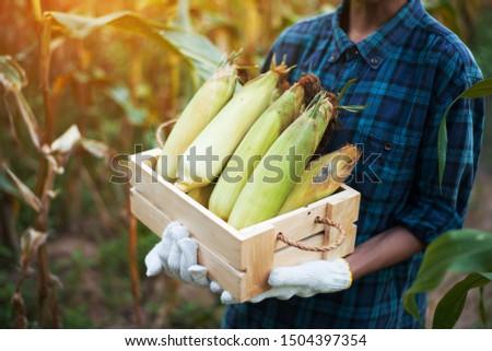 Corn harvest Corn farmer Corn harvest Growing corn Organic Farming, Organic Farming, Food and Vegetable Production, Organic Farming, Agricultural Land