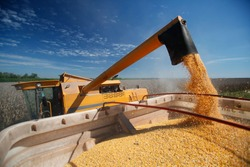 corn harvest on farmland in brazil