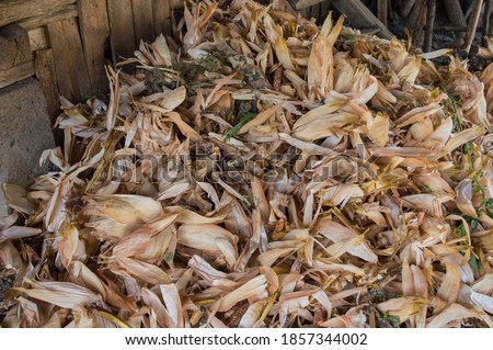 Corn husks. Pile of corn husks in the shed. Dried corn husks.  The husk is left from corn after the harvest season Stock photo ©