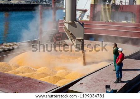 Corn in bulk carrier hold. Casting hold of corn. Elevator crane loads ship bulk carrier with corn